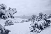 After snowstorm a — Stockfoto