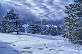 Winter landscape U — Stock Photo