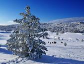 Christmas tree a — Stock Photo
