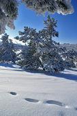Sunny winter day — Stock Photo