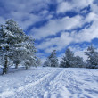 Winter landscape D — Stock Photo
