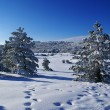 Winter landscape J — Stock Photo