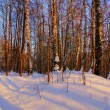 Winter forest B — Stock Photo