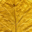 Oak leaf background — Stock Photo