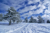 Winter landscape D — Stock Photo