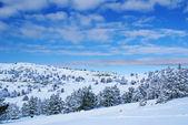 Winter landscape N — Stock Photo