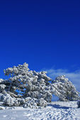 Winter landscape M — Stock Photo