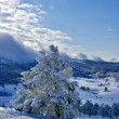 Winter landscape — Stock Photo #1507292