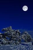 Moonlight night — Stock Photo