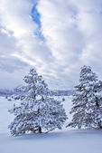 After snowstorm — Stock Photo