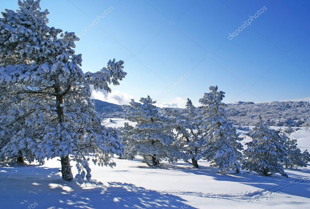 homoseksuelle billeder зима № 20310