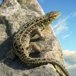 Royalty-Free Stock Photo: Lizard on rock, on blue sky.