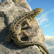Lizard on rock, on blue sky. — Stock Photo