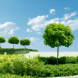 Royalty-Free Stock Photo: Green avenue on blue sky.