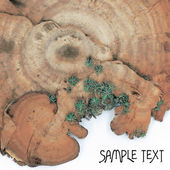 Bracket fungus background. — Stock Photo