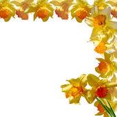 Flores de saudações — Foto Stock