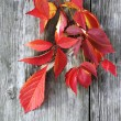 Autumnal leaf on old wood — Stock Photo