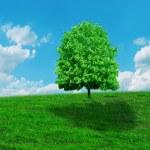 Green tree on blue sky under the sun. — Stock Photo