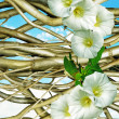 Stock Photo: Hurdle and convolvulus on blue sky