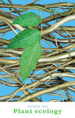 Dry branchs and one green branch — Stock Photo
