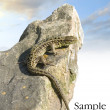 Lizard on rock, on blue sky — Stock Photo