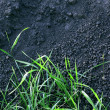 Green grass and soil background — Stock Photo