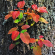 Fresh red leaf on an rough bark - Stock Photo