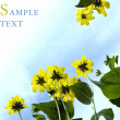 Stock Photo: Cultivated flowers on blue sky