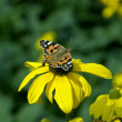 Flower, butterfly and worker bee. — Stock Photo #1358658