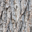 Bark — Stock Photo #1203841