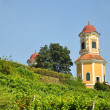 Stock Photo: Vineyard at Castle Stainz, Styria, Austr