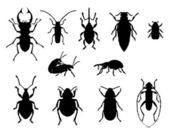 Collection of beetles — Stock Photo