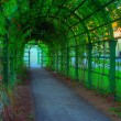 Green lane — Foto Stock