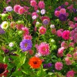 Garden bed full of flowers — Stock Photo