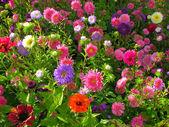 Garden bed full of flowers — Stock Photo