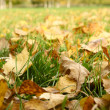 Autumn foliage — Stock Photo #1157526