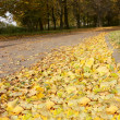 Stock Photo: Autumn foliage2