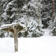Canopy in winter forest — Stock Photo #1157546