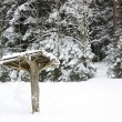 Stock Photo: Canopy in winter forest