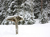 Canopy in the winter forest — Stock Photo