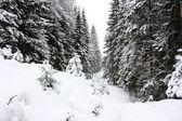 Zimní dřevo — Stock fotografie