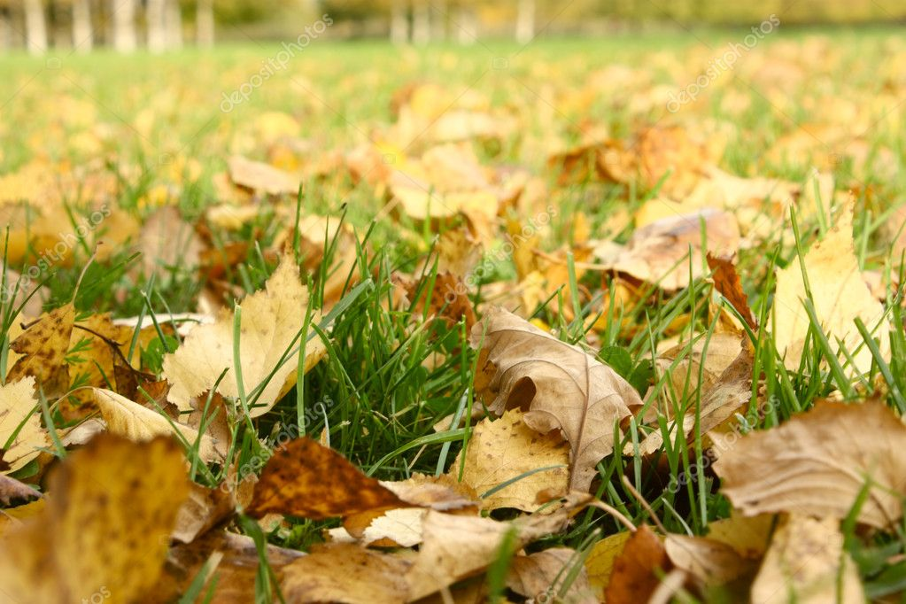 Autumn foliage in park — Stock Photo #1157526