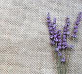 Ramo de flores de lavanda lila en sackc — Foto de Stock