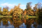 Golden autumn in Russia. — Stock Photo