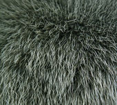 The fur of a mink painted green colour c — Stock Photo
