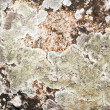 Stone grunge texture cuse as backgrou — Stock Photo #1176575