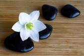 Kamienie spa czarny z białym kwiatem — Zdjęcie stockowe