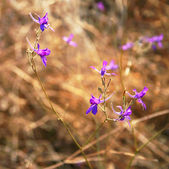 Violet flowers in a field — Stock Photo