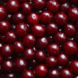Wet ripe cherries as background — Stock Photo