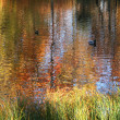 Golden autumn in Russia. Reflection in w — Stock Photo